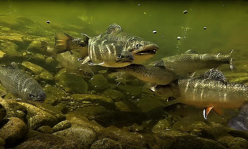 Jaké jsou ryby na Karlovarsku