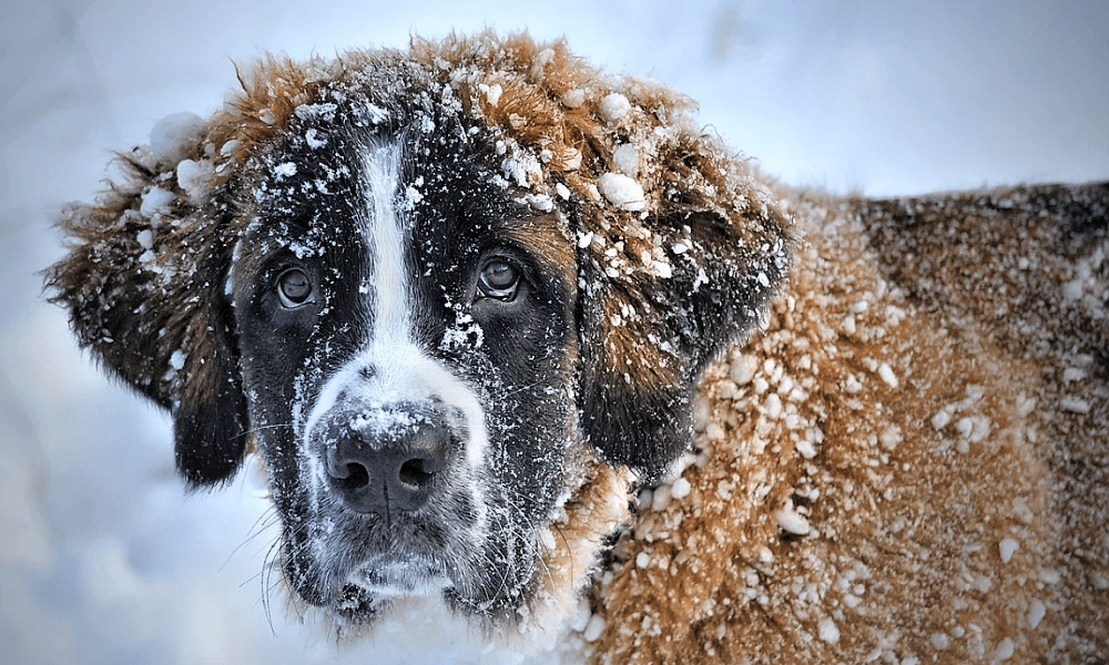 Silvestrovské veselí zvířata stresuje, i letos jich mnoho skončí v útulcích