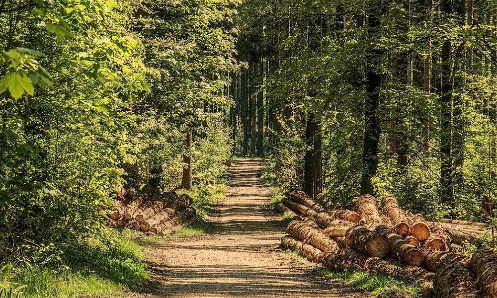 Politici z Aše chtějí prodat lesy města v Německu
